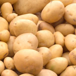 Seed Potatoes 80 Varieties