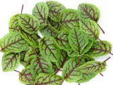 Sorrel - Herb , Red Veined (OFFER)