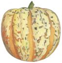 Squash , Harlequin (High Sugar) Small Bush type (RECENTLY ADDED)