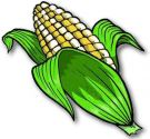 Sweet Corn , Double Standard - Bicolour