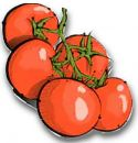 Tomato , Red Romello - Bush Cherry Plum (BLIGHT RESISTANT)