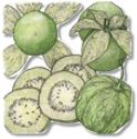 Tomatillo , Pineapple (Mexican Husk Tomato)