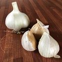 Garlic, Autumn-planting, Elephant Garlic