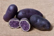 Potatoes (Tubers) , Vitelotte Noire - 1850 (French Salad)