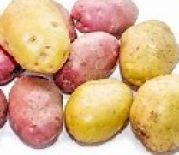 Seed Potato Collection, The 'All-season' Collection