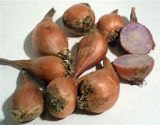 Shallot Sets, Autumn/Winter-planting, Griselle